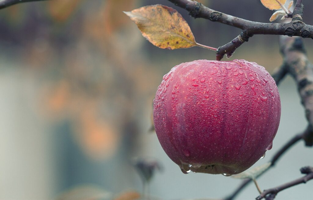 Que significa la manzana de apple