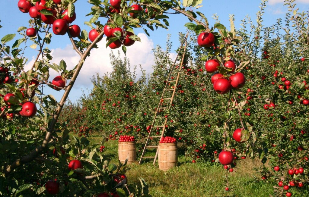 La manzana de apple